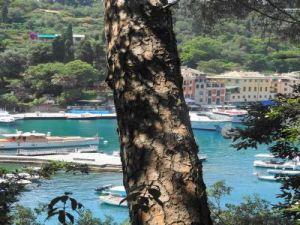 2012 231 Portofino