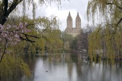 307 Central Park13