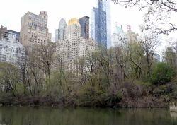 311 Central park