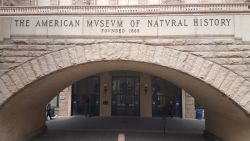 366 Nature History Museum 4