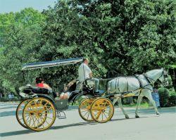 060 een koets rijd in Parque Maria Luisa Het ligt bij Plaza Espagna